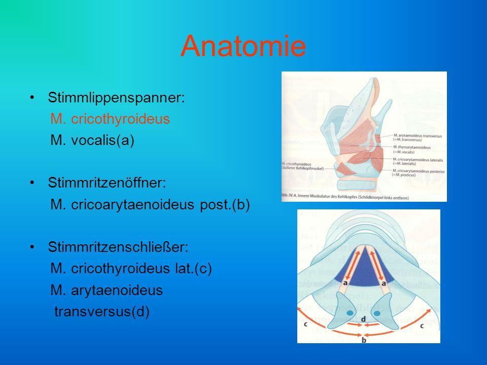 Anatomie Stimmlippenspanner: M. cricothyroideus M. vocalis(a) Stimmritzenöffner: M. cricoarytaenoideus post.(b) Stimmritzenschließer: M. cricothyroide