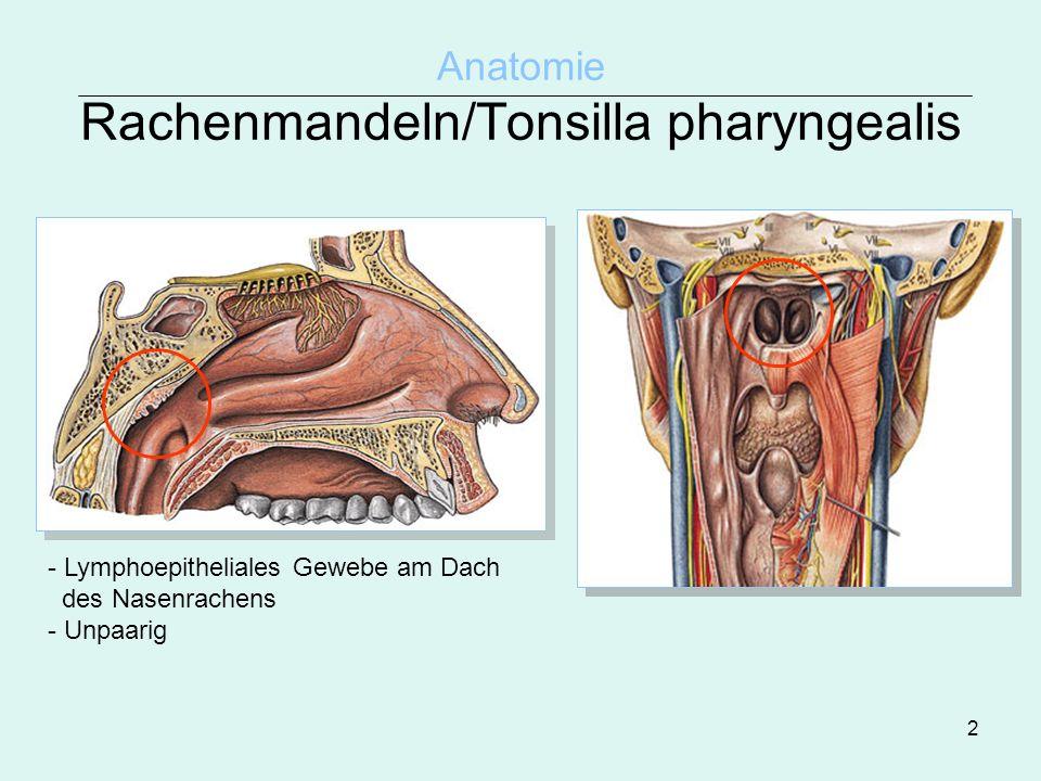 2 Anatomie Rachenmandeln/Tonsilla pharyngealis - Lymphoepitheliales Gewebe am Dach des Nasenrachens - Unpaarig