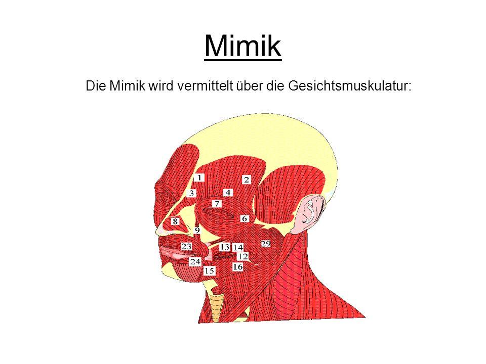 Mimik Die Mimik wird vermittelt über die Gesichtsmuskulatur: