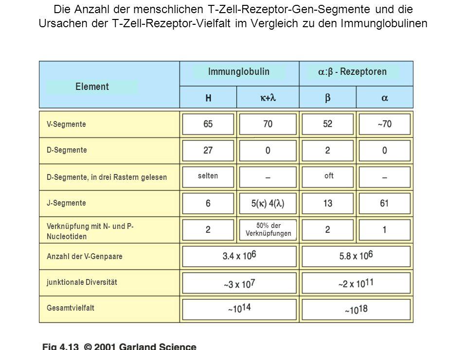 Die Anzahl der menschlichen T-Zell-Rezeptor-Gen-Segmente und die Ursachen der T-Zell-Rezeptor-Vielfalt im Vergleich zu den Immunglobulinen Element Imm