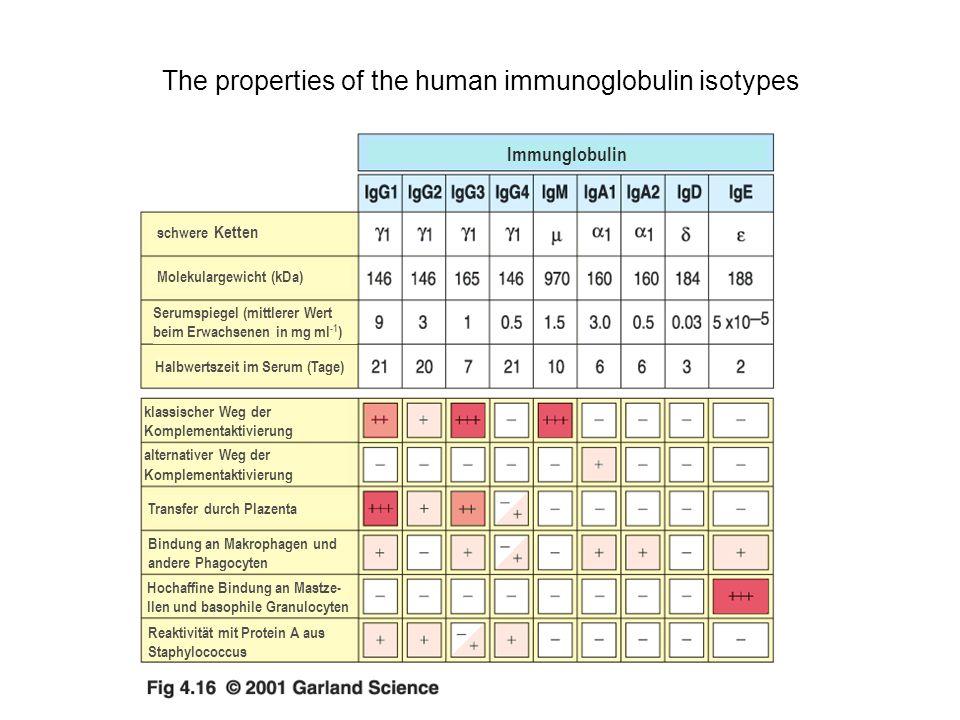 The properties of the human immunoglobulin isotypes Immunglobulin schwere Ketten Molekulargewicht (kDa) Serumspiegel (mittlerer Wert beim Erwachsenen