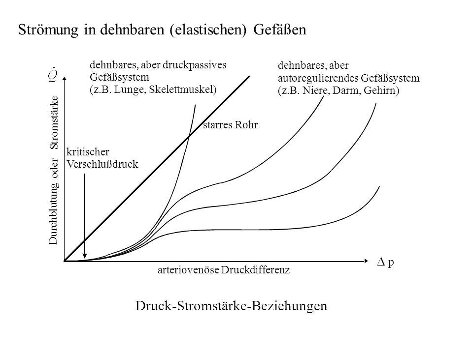 Strömung in dehnbaren (elastischen) Gefäßen o d e r S t r o m s t ä r k e dehnbares, aber druckpassives Gefäßsystem (z.B. Lunge, Skelettmuskel) starre
