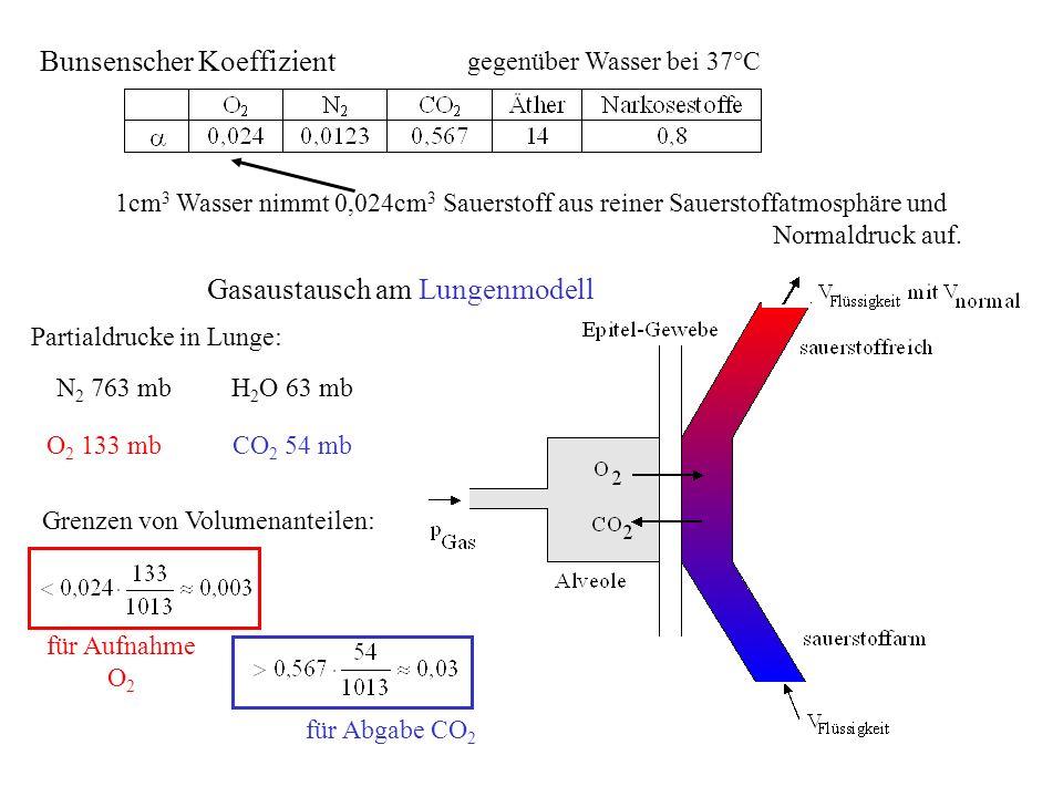 Gasaustausch am Lungenmodell gegenüber Wasser bei 37°C 1cm 3 Wasser nimmt 0,024cm 3 Sauerstoff aus reiner Sauerstoffatmosphäre und Normaldruck auf. Pa
