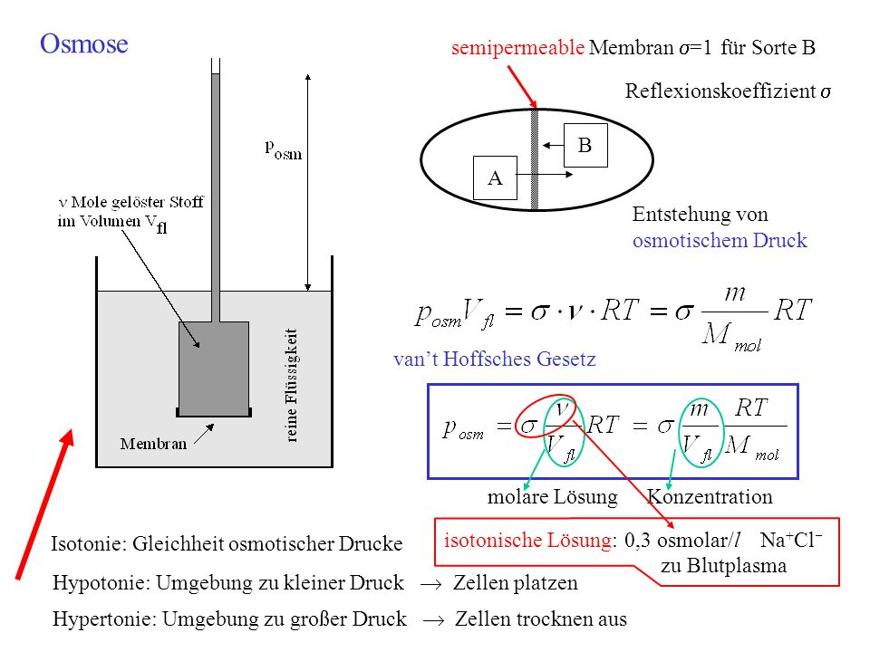 semipermeable Membran =1 für Sorte B Reflexionskoeffizient B A Entstehung von osmotischem Druck vant Hoffsches Gesetz molare LösungKonzentration Osmos