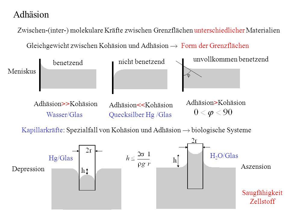Zwischen-(inter-) molekulare Kräfte zwischen Grenzflächen unterschiedlicher Materialien Gleichgewicht zwischen Kohäsion und Adhäsion Form der Grenzflächen benetzend nicht benetzend unvollkommen benetzend Adhäsion>>Kohäsion Adhäsion<<Kohäsion Adhäsion>Kohäsion Wasser/GlasQuecksilber Hg /Glas Kapillarkräfte: Spezialfall von Kohäsion und Adhäsion biologische Systeme Hg/Glas H 2 O/Glas Aszension Depression Meniskus Adhäsion Saugfähigkeit Zellstoff