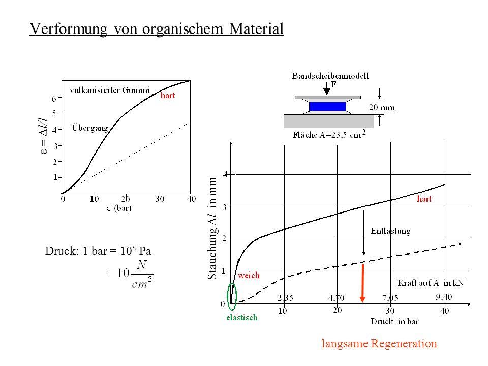 Verformung von organischem Material Stauchung l in mm l/l Druck: 1 bar = 10 5 Pa langsame Regeneration
