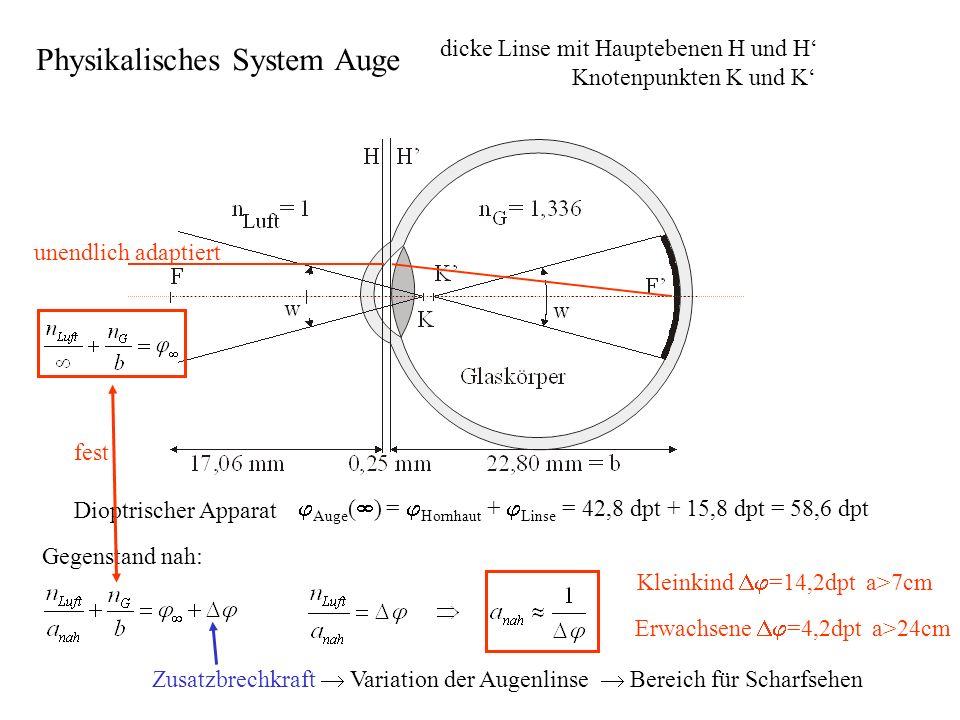 Dioptrischer Apparat Auge ( ) = Hornhaut + Linse = 42,8 dpt + 15,8 dpt = 58,6 dpt dicke Linse mit Hauptebenen H und H Knotenpunkten K und K unendlich