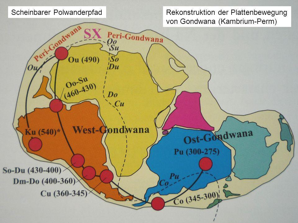 Scheinbarer PolwanderpfadRekonstruktion der Plattenbewegung von Gondwana (Kambrium-Perm)