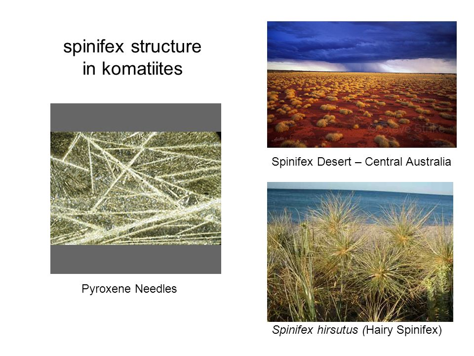 Pyroxene Needles Spinifex Desert – Central Australia spinifex structure in komatiites Spinifex hirsutus (Hairy Spinifex)