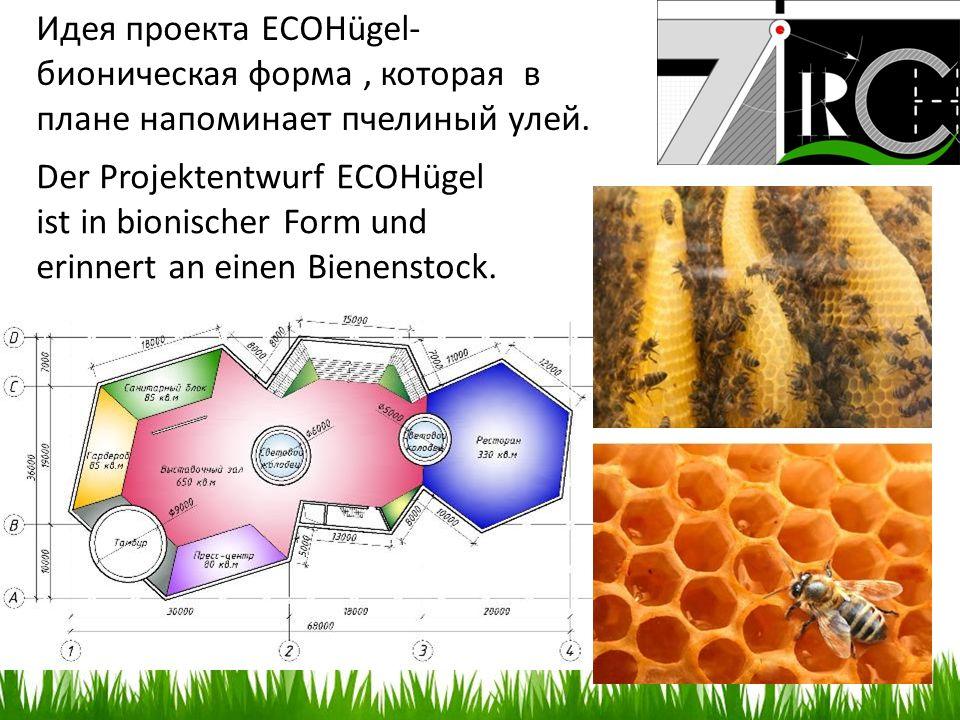 Идея проекта ECOHügel- бионическая форма, которая в плане напоминает пчелиный улей. Der Projektentwurf ECOHügel ist in bionischer Form und erinnert an