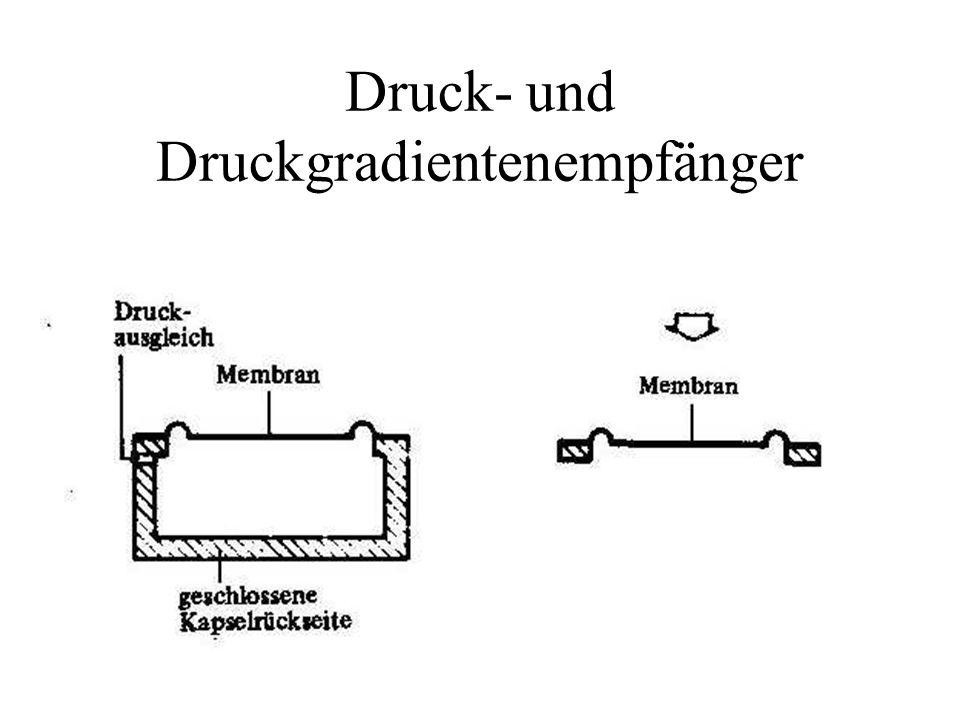 Druck- und Druckgradientenempfänger