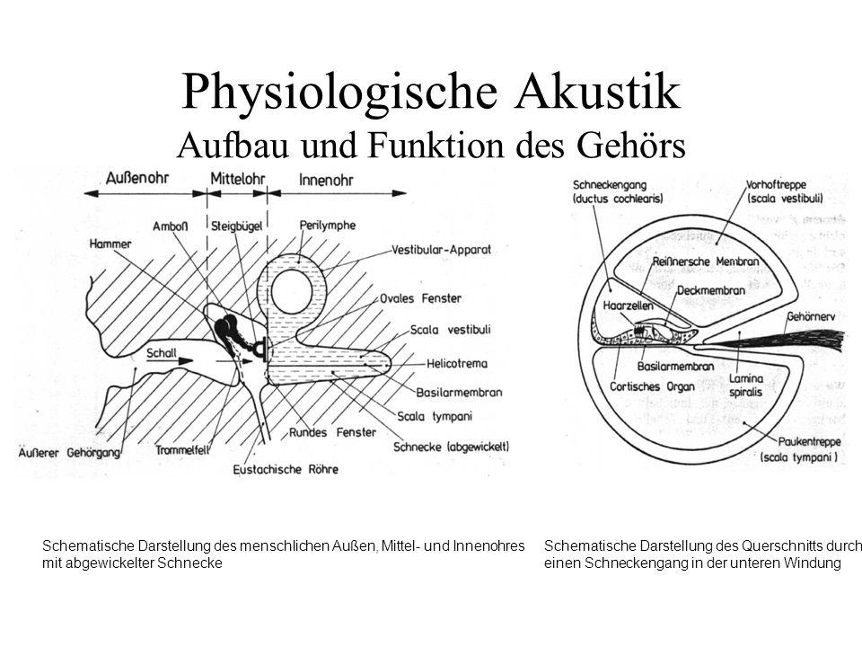 Physiologische Akustik Aufbau und Funktion des Gehörs Schematische Darstellung des menschlichen Außen, Mittel- und Innenohres mit abgewickelter Schnec
