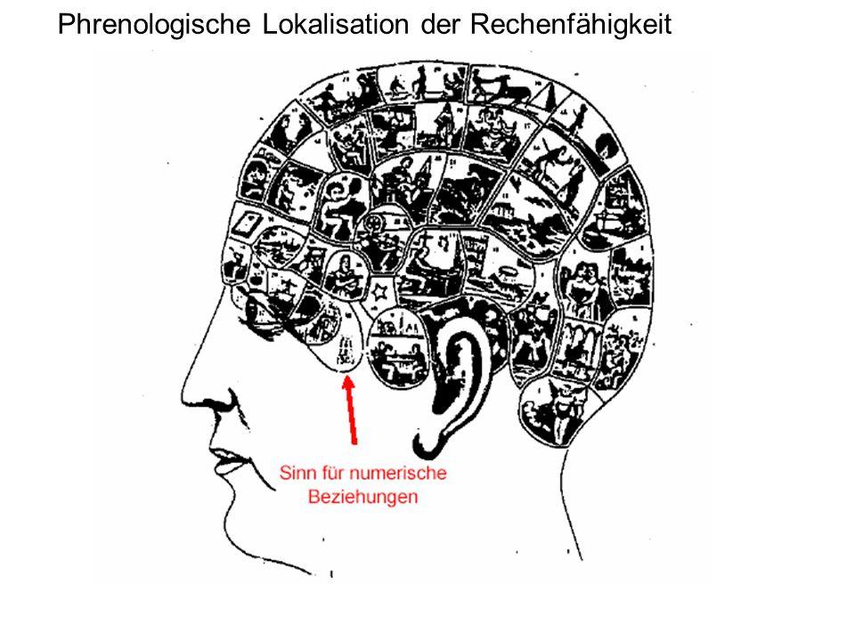 Phrenologische Lokalisation der Rechenfähigkeit