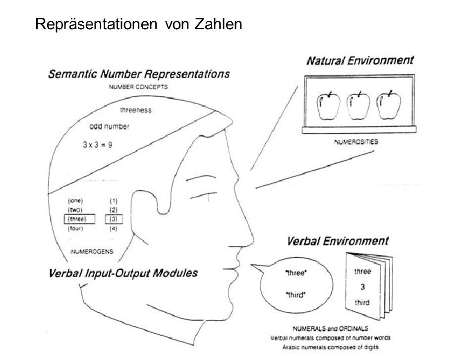 Funktionelle Architektur des Rechnens
