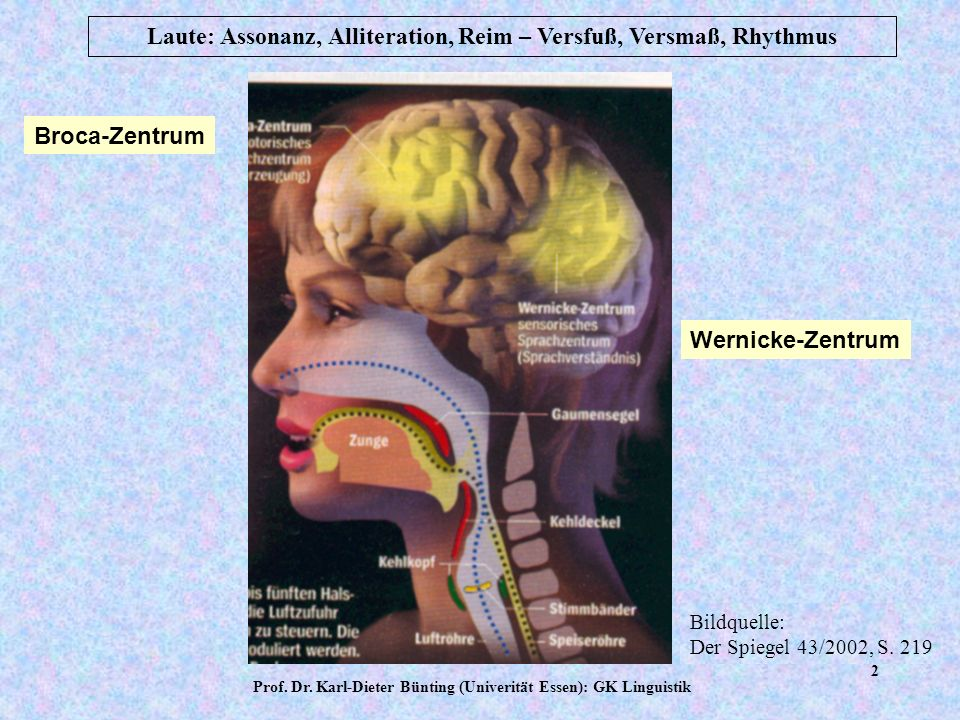 Prof. Dr. Karl-Dieter Bünting (Univerität Essen): GK Linguistik 1 Laute: Assonanz, Alliteration, Reim – Versfuß, Versmaß, Rhythmus Themen des ersten B