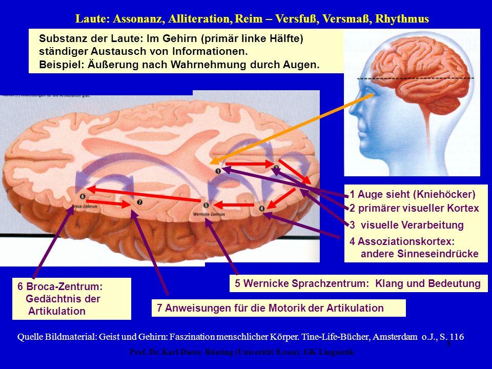 Prof. Dr. Karl-Dieter Bünting (Univerität Essen): GK Linguistik 2 Laute: Assonanz, Alliteration, Reim – Versfuß, Versmaß, Rhythmus Broca-Zentrum Werni