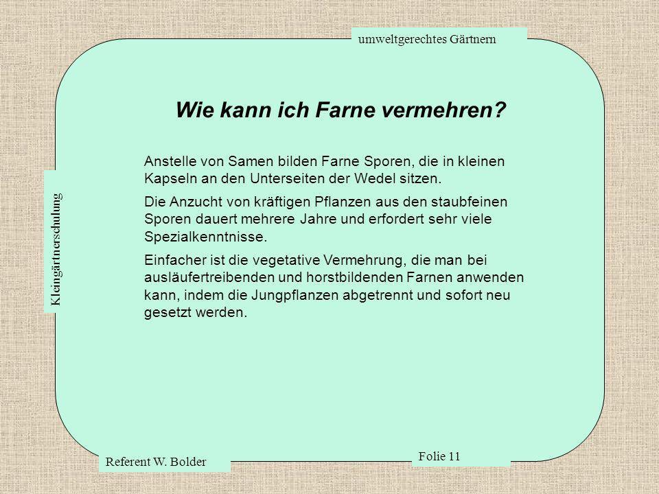 umweltgerechtes Gärtnern Referent W. Bolder Folie 11 Kleingärtnerschulung Wie kann ich Farne vermehren? Anstelle von Samen bilden Farne Sporen, die in