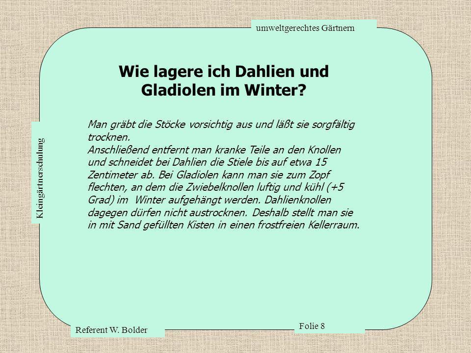 umweltgerechtes Gärtnern Referent W. Bolder Folie 8 Kleingärtnerschulung Wie lagere ich Dahlien und Gladiolen im Winter? Man gräbt die Stöcke vorsicht