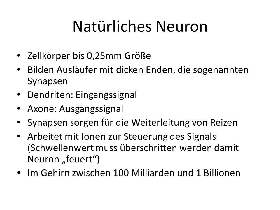 Natürliches Neuron Zellkörper bis 0,25mm Größe Bilden Ausläufer mit dicken Enden, die sogenannten Synapsen Dendriten: Eingangssignal Axone: Ausgangssi