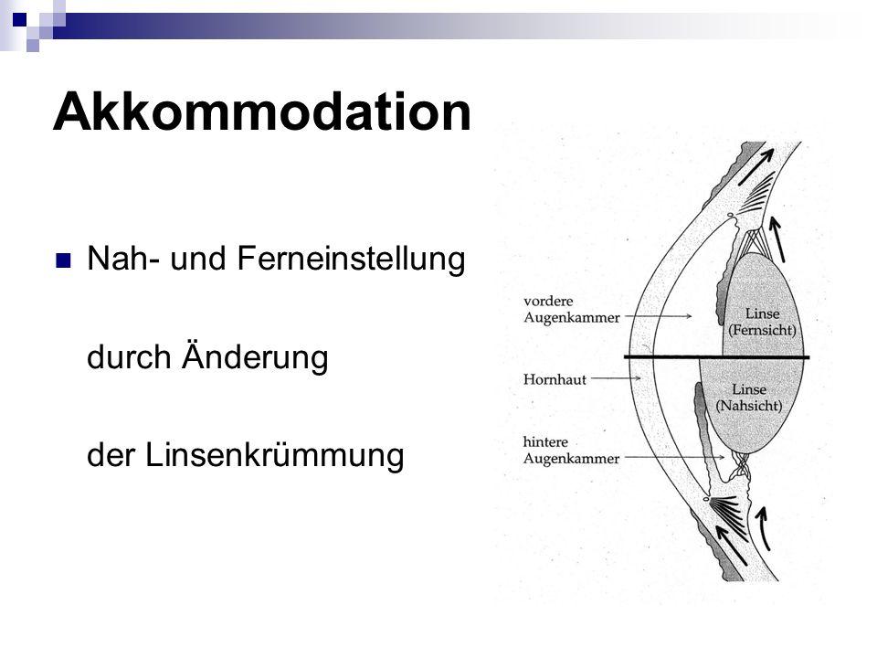 Akkommodation Nah- und Ferneinstellung durch Änderung der Linsenkrümmung