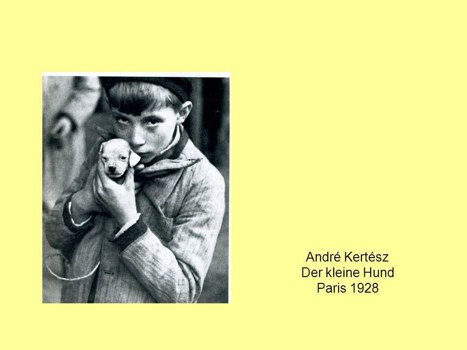 André Kertész Der kleine Hund Paris 1928
