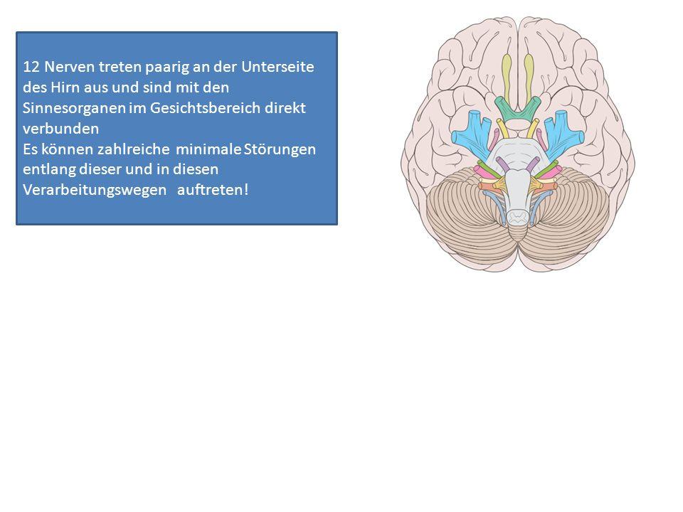 12 Nerven treten paarig an der Unterseite des Hirn aus und sind mit den Sinnesorganen im Gesichtsbereich direkt verbunden Es können zahlreiche minimal
