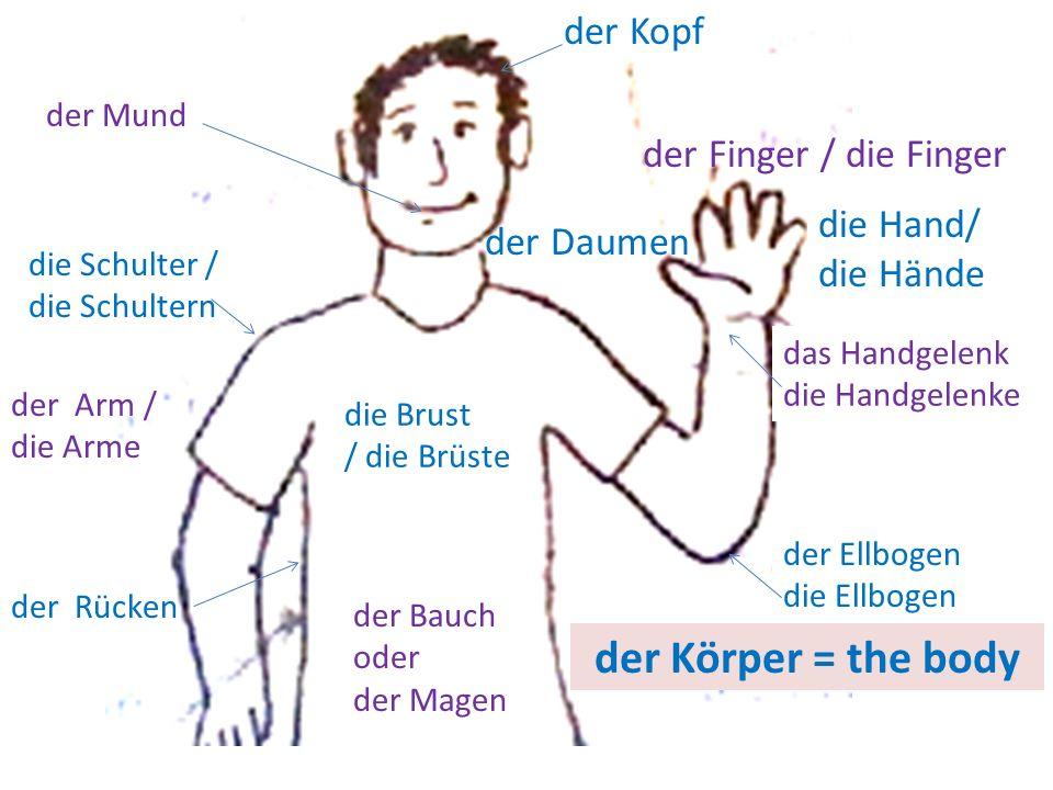 der Kopf der Daumen der Finger / die Finger die Hand/ die Hände das Handgelenk die Handgelenke der Ellbogen die Ellbogen die Brust / die Brüste der Ba