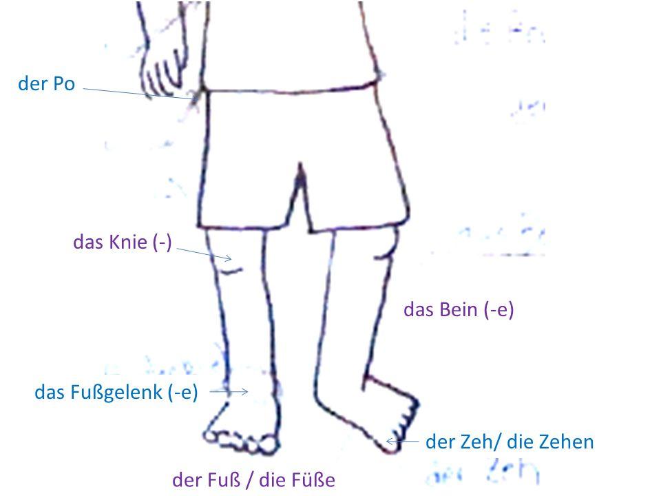 der Po das Knie (-) das Fußgelenk (-e) der Fuß / die Füße der Zeh/ die Zehen das Bein (-e)