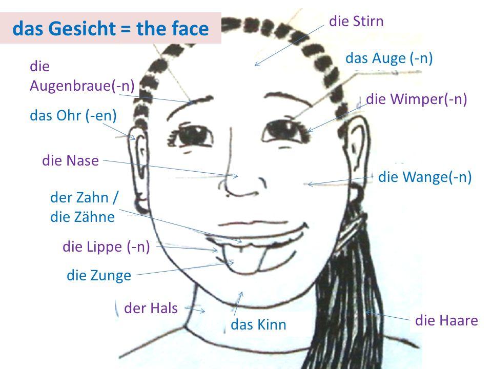das Gesicht = the face das Auge (-n) die Wimper(-n) die Wange(-n) das Kinn die Zunge der Hals die Lippe (-n) der Zahn / die Zähne die Nase das Ohr (-e