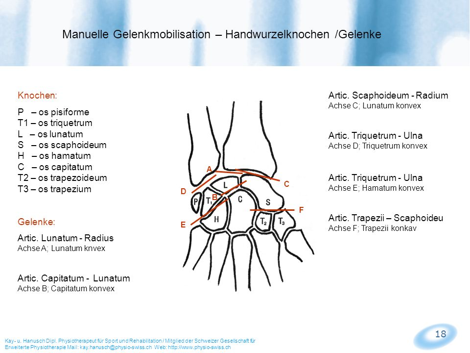 18 Manuelle Gelenkmobilisation – Handwurzelknochen /Gelenke Kay- u. Hanusch Dipl. Physiotherapeut für Sport und Rehabilitation / Mitglied der Schweize