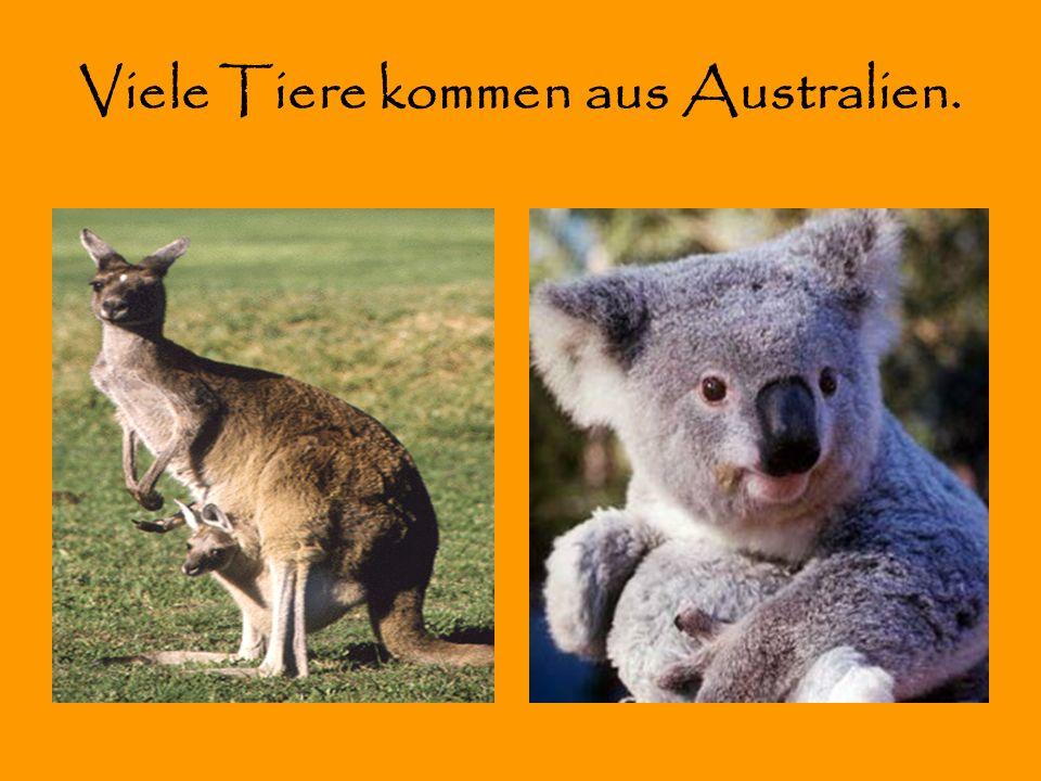 Viele Tiere kommen aus Australien.