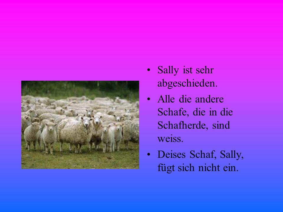 Sally ist sehr abgeschieden. Alle die andere Schafe, die in die Schafherde, sind weiss.