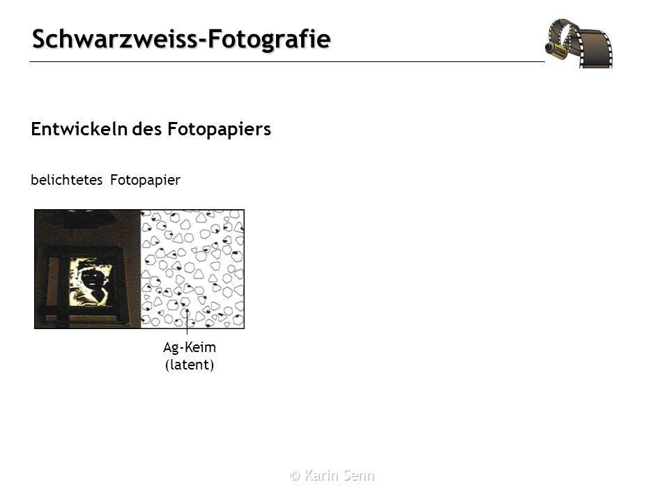Schwarzweiss-Fotografie Entwickeln des Fotopapiers belichtetes Fotopapier Ag-Keim (latent)