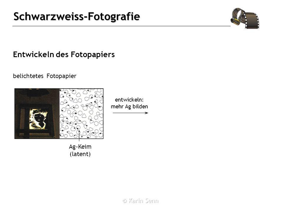 Schwarzweiss-Fotografie Entwickeln des Fotopapiers belichtetes Fotopapier Ag-Keim (latent) entwickeln: mehr Ag bilden
