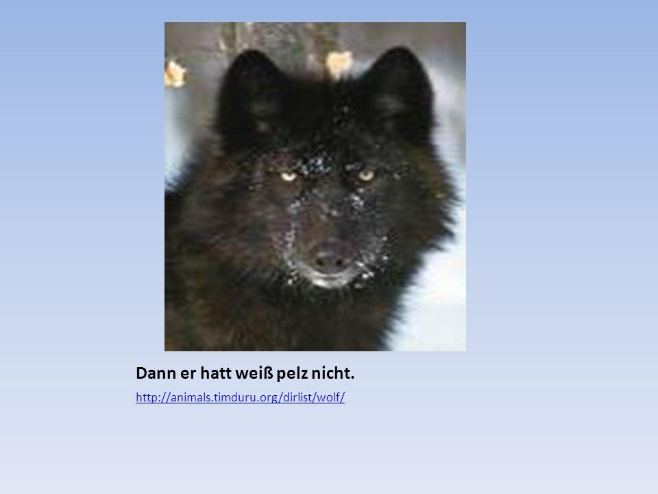 Dann er hatt weiß pelz nicht. http://animals.timduru.org/dirlist/wolf/