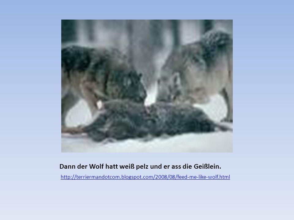 Dann der Wolf hatt weiß pelz und er ass die Geißlein.