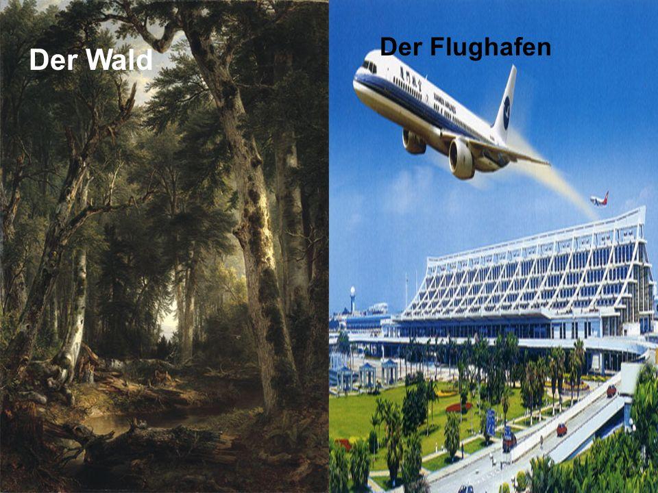Der Wald Der Flughafen