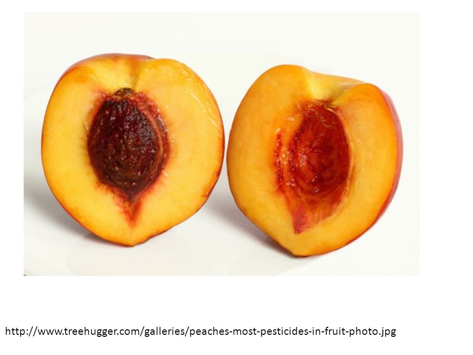 http://www.treehugger.com/galleries/peaches-most-pesticides-in-fruit-photo.jpg