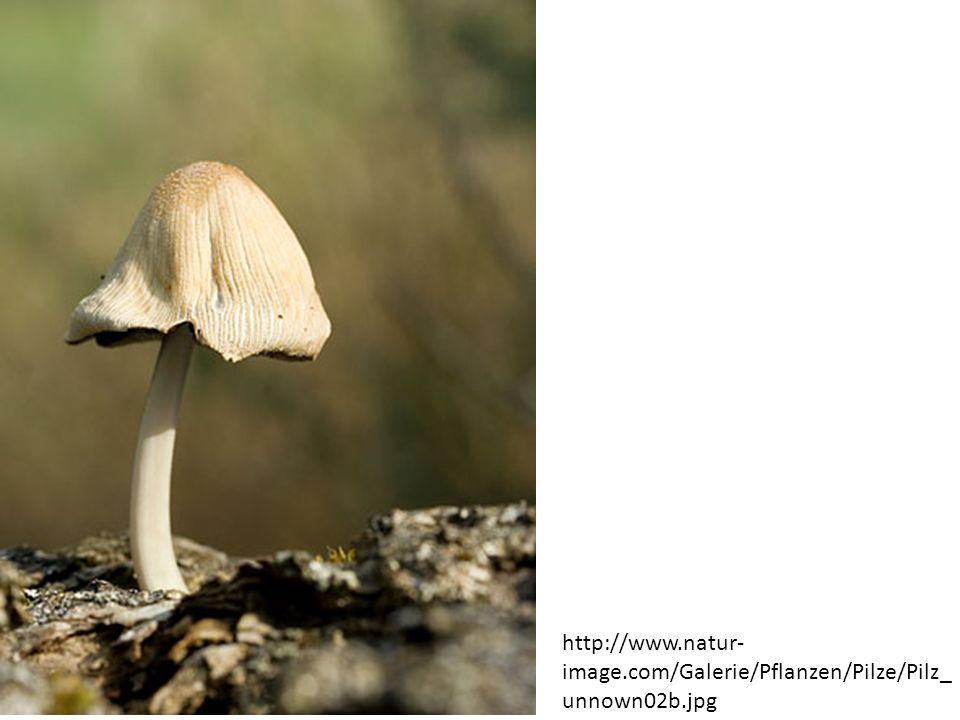 http://www.natur- image.com/Galerie/Pflanzen/Pilze/Pilz_ unnown02b.jpg
