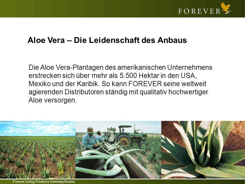 Forever Living Products Germany/Austria Aloe Vera – Die Leidenschaft des Anbaus Die Aloe Vera-Plantagen des amerikanischen Unternehmens erstrecken sic