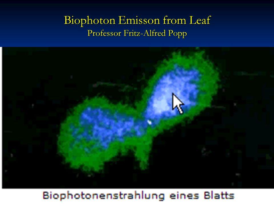 Biophoton Emisson from Leaf Professor Fritz-Alfred Popp