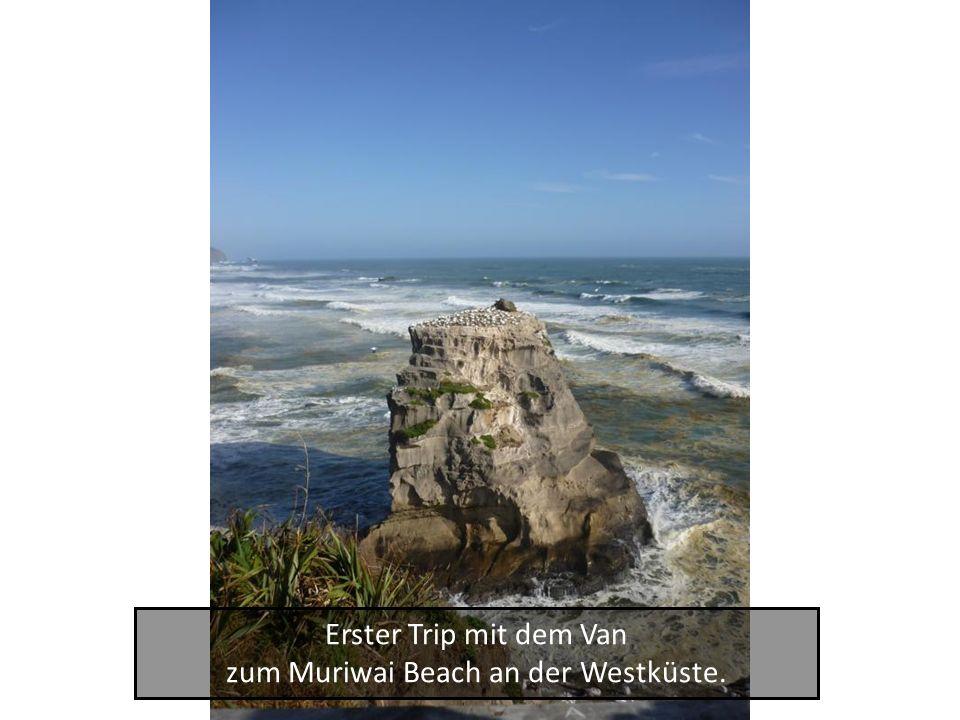 Erster Trip mit dem Van zum Muriwai Beach an der Westküste.