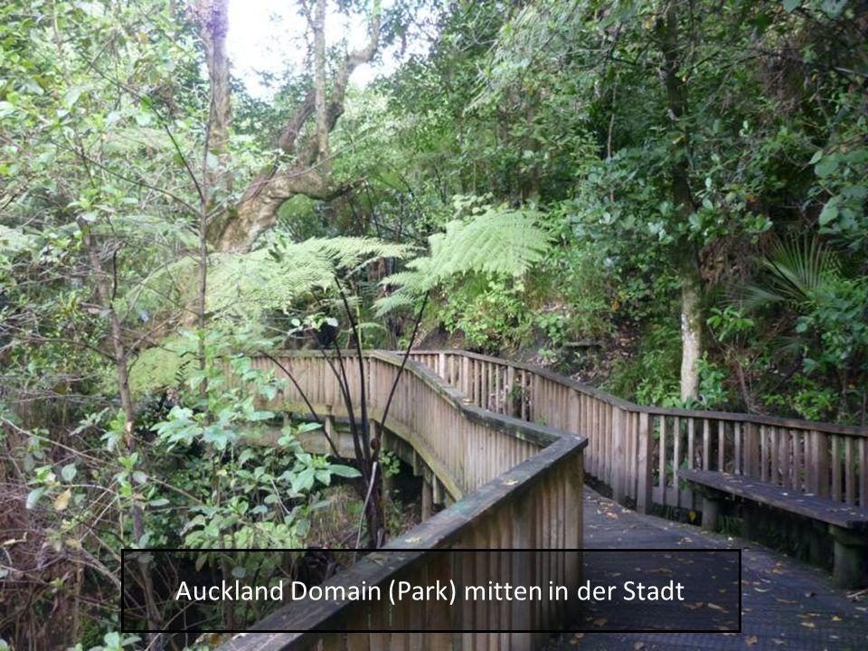 Auckland Domain (Park) mitten in der Stadt