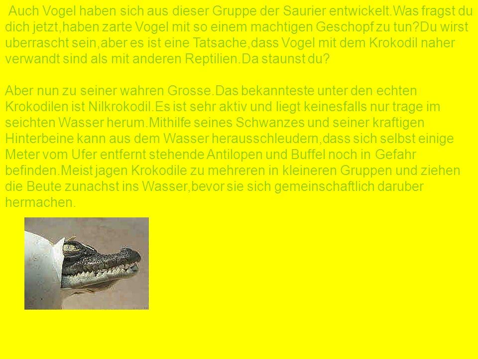 Auch Vogel haben sich aus dieser Gruppe der Saurier entwickelt.Was fragst du dich jetzt,haben zarte Vogel mit so einem machtigen Geschopf zu tun?Du wi