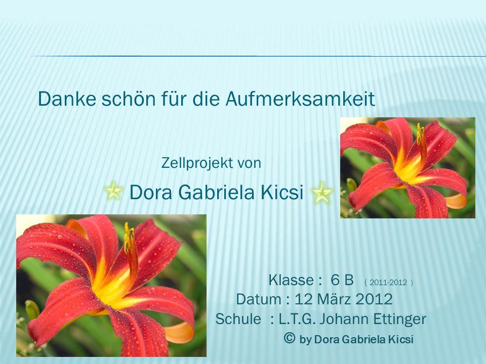 Danke schön für die Aufmerksamkeit Zellprojekt von Dora Gabriela Kicsi Klasse : 6 B ( 2011-2012 ) Datum : 12 März 2012 Schule : L.T.G. Johann Ettinger