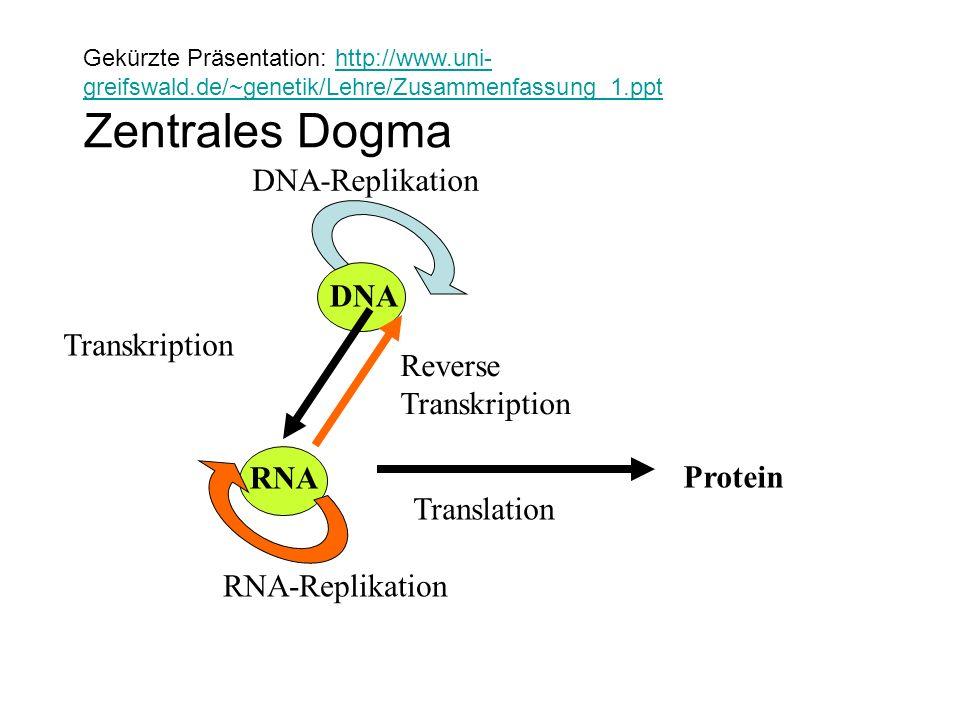 DNA DNA-Replikation RNA Reverse Transkription Protein Translation RNA-Replikation Transkription Gekürzte Präsentation: http://www.uni- greifswald.de/~