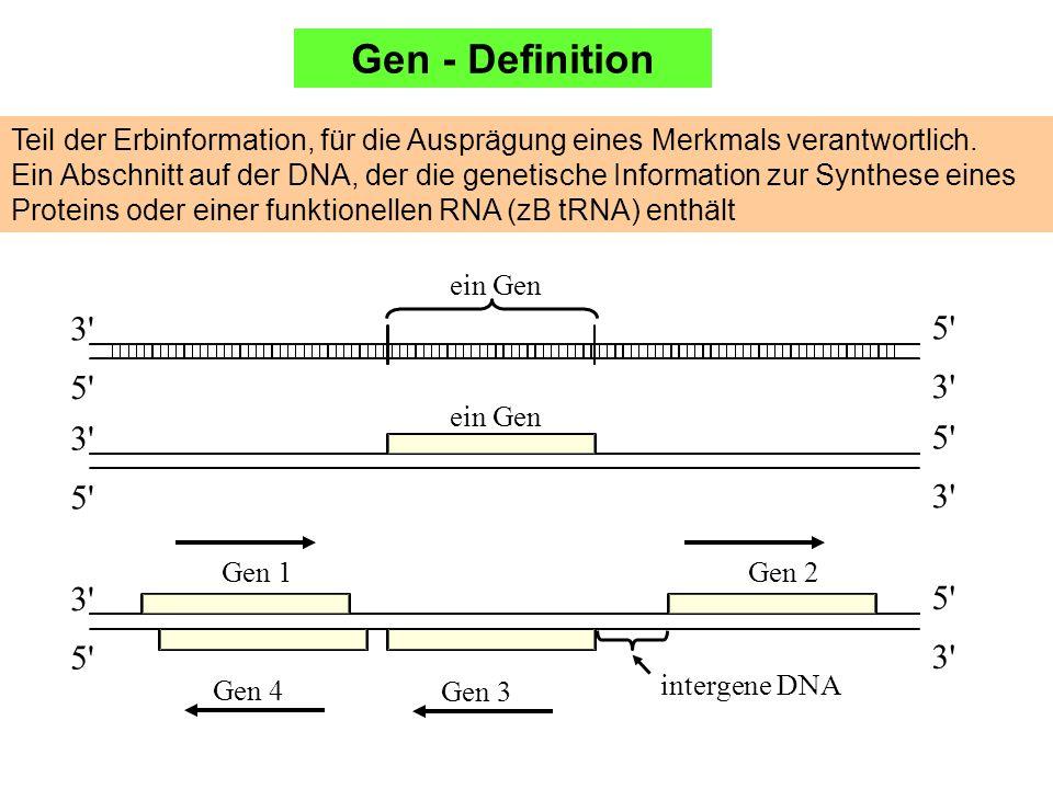 Teil der Erbinformation, für die Ausprägung eines Merkmals verantwortlich. Ein Abschnitt auf der DNA, der die genetische Information zur Synthese eine