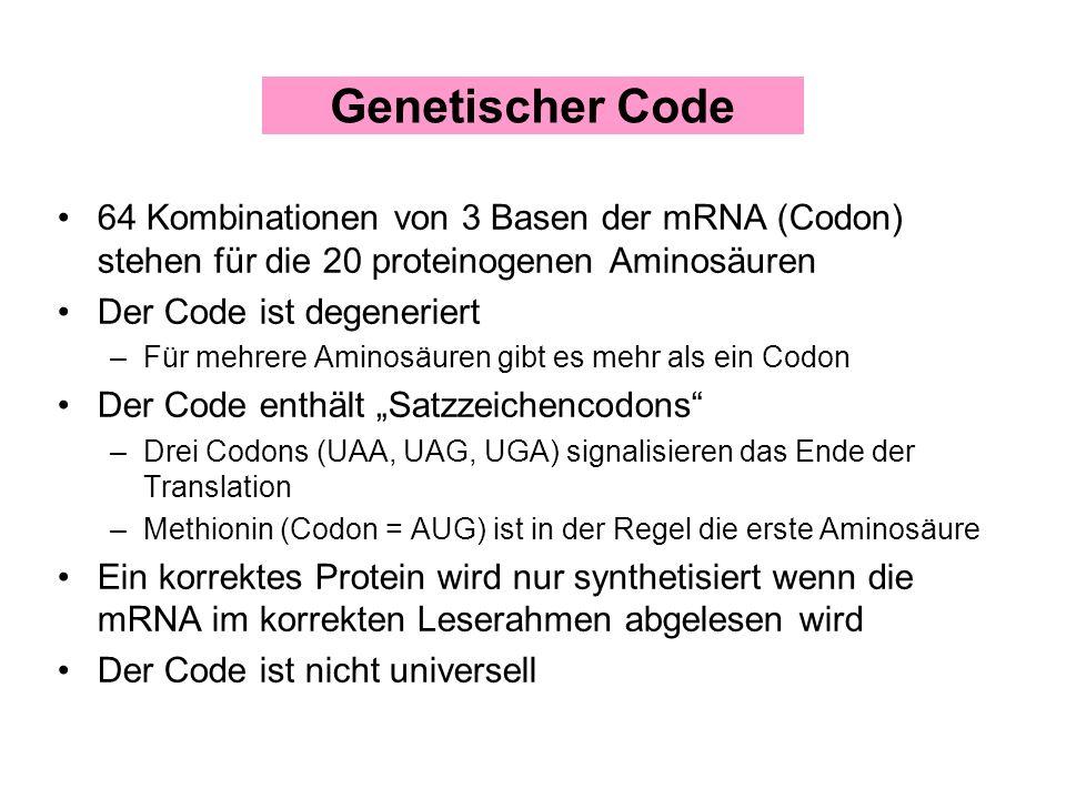 64 Kombinationen von 3 Basen der mRNA (Codon) stehen für die 20 proteinogenen Aminosäuren Der Code ist degeneriert –Für mehrere Aminosäuren gibt es me