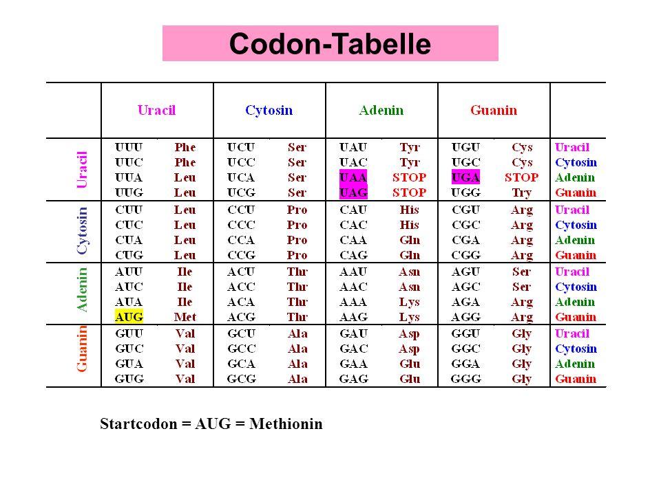 Uracil Cytosin Adenin Guanin Startcodon = AUG = Methionin Codon-Tabelle