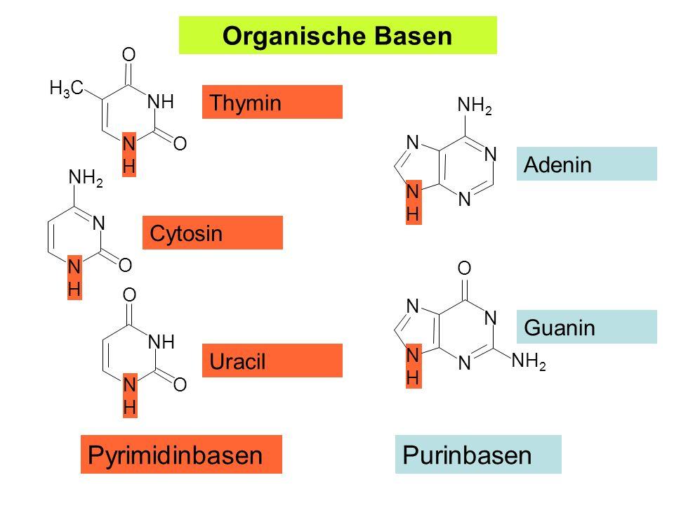 Adenin Guanin Uracil Cytosin Thymin PyrimidinbasenPurinbasen Organische Basen NHNH N N N NH 2 NHNH N N N O NHNH NH O O H3CH3C NHNH N O NH 2 NHNH NH O